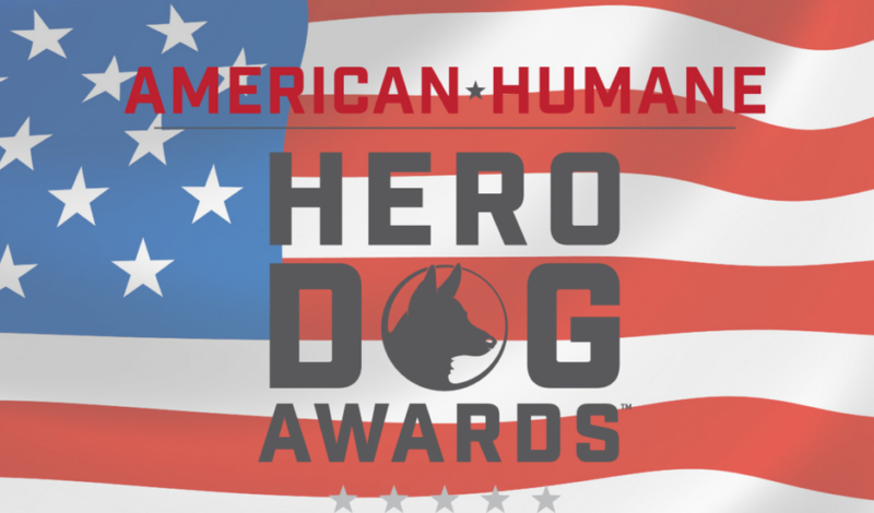 Guide Dog Frances One Of 21 Courageous Canines Competing in Hero Dog Awards